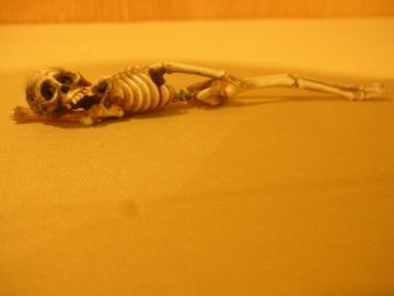skeleton,jpg