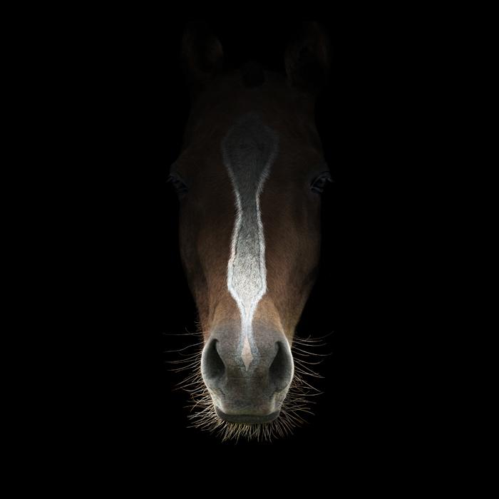 CavalloX